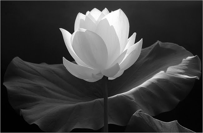 White flower in darkness