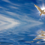 holy dove over water