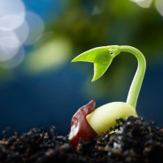 The Mindset of a Seed