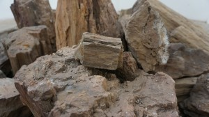 petrified wood rock altar